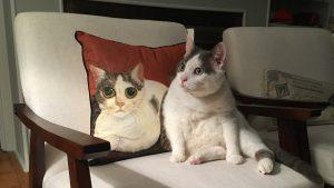 12 consejos para fotografiar mascotas: cómo tomar excelentes fotografías de su gato o perro