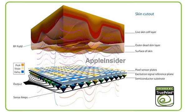 Escáner de huellas dactilares de Apple